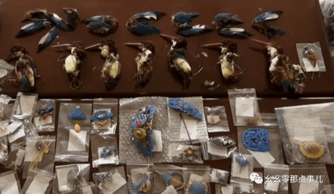 残忍!北京一点翠饰品贩子被刑拘,家中翠鸟尸体成堆