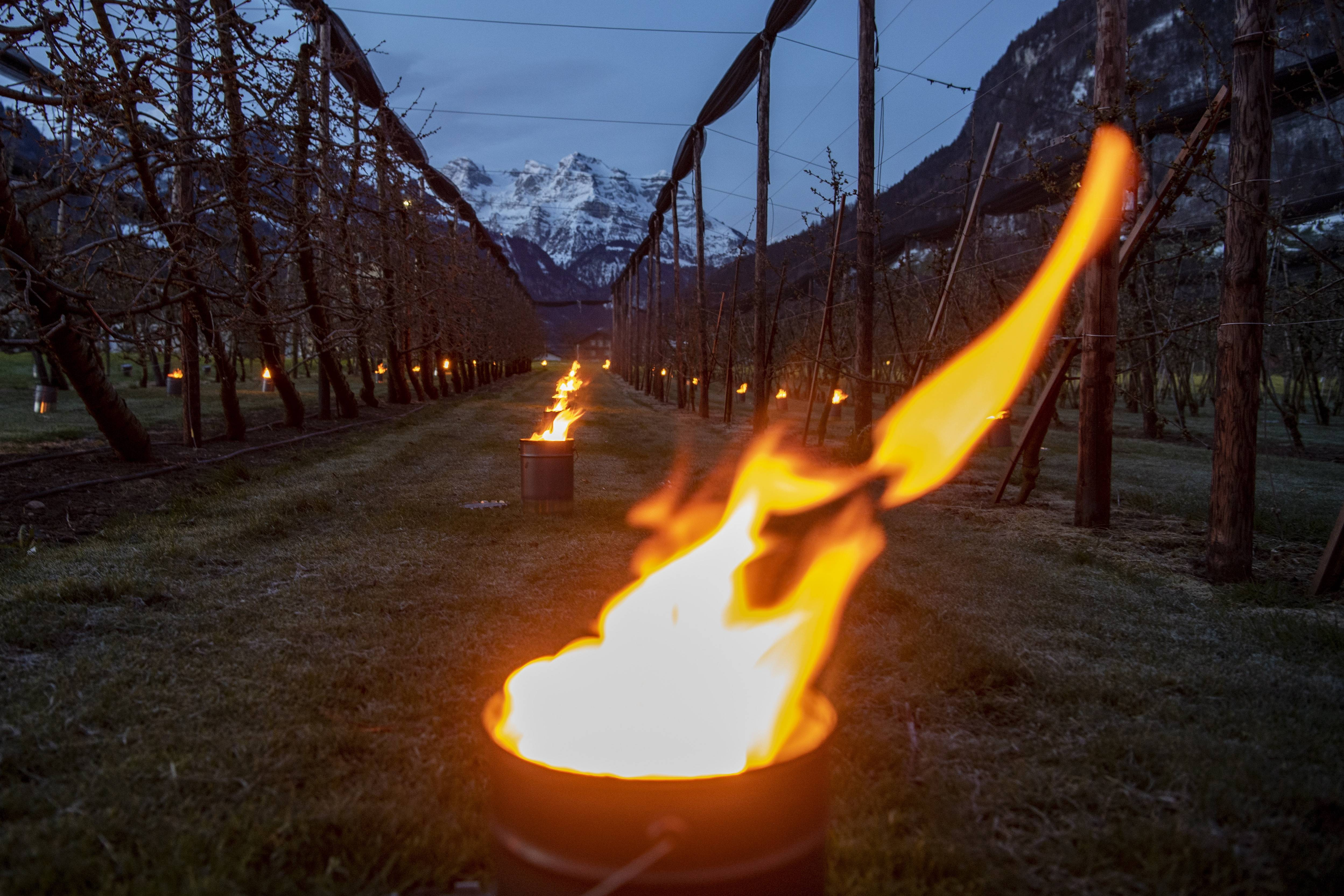 瑞士:点蜡烛 防霜冻