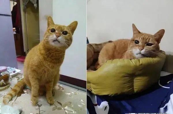 22岁高龄猫跟阿嬷撒娇,深情对望的画面超有爱!