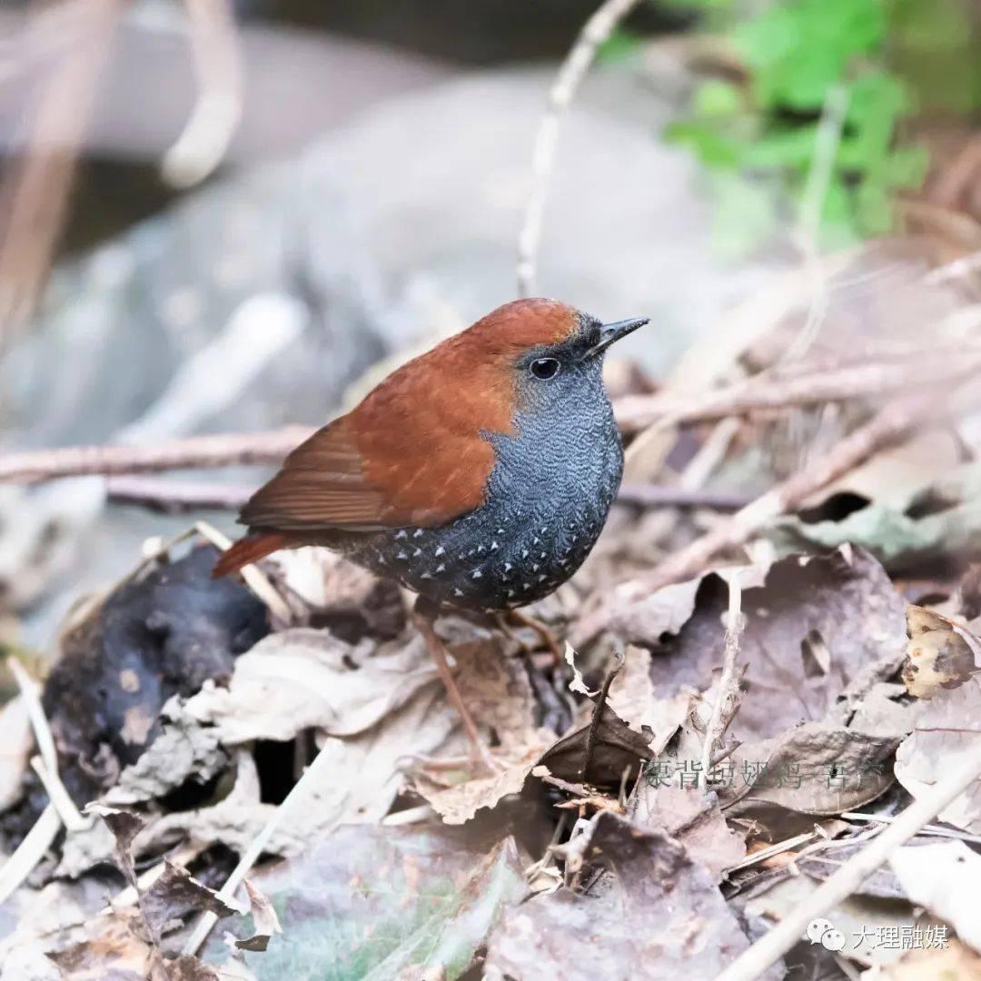 视界·人物丨观鸟者:与鸟邂逅山水间