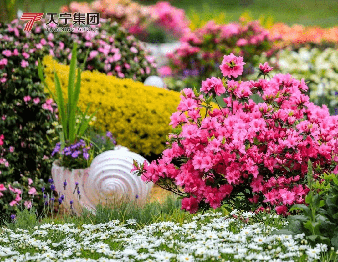 本月24号,第三届中国(日照)杜鹃花节惊艳启幕!