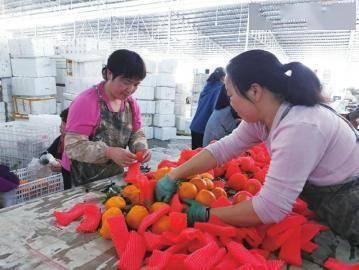 回乡种地卖水果 营收轻松破千万