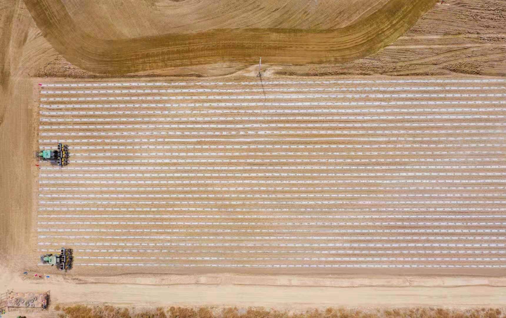两个人挑战管理3000亩棉田,「极飞科技」国内首个无人化棉花农场项目正式启动