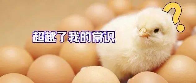 意念力量!熟蛋返生孵出小鸡?中科院:呵