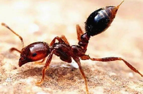 扩散12省!致命蚂蚁肆虐、巨型蜗牛泛滥、剧毒蜘蛛入侵...这场危机还是来了
