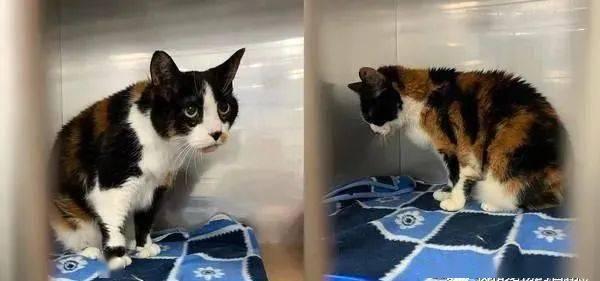 养了17年的三花猫遭弃医院,眼神落寞望着墙角发呆!