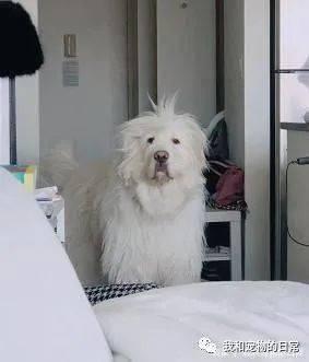 一早起来就被爱犬帅到!网友:狗狗刚睡醒的样子真帅