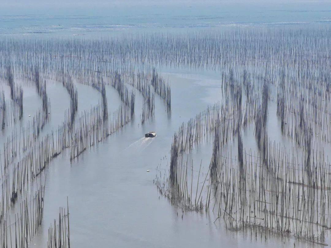 这里是中国的斯里兰卡,拥有国内最美的海岸线,却低调了多年