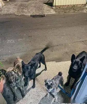 出门散步遛1只狗,结果回家却莫名的变4只?
