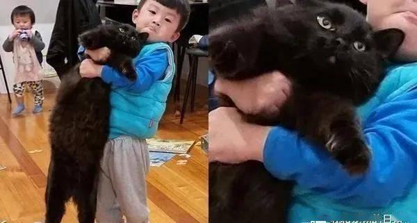 萌弟使出吃奶力抱猫,主子无奈脸:抱不动硬要抱……喵生真难!