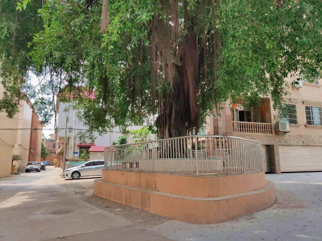 新篮球场、滨水游步道...丹灶杜家村将大变身,打造环村景观路线!