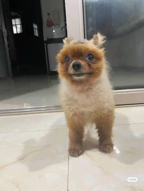 让老妈帮忙带狗,可回家就愣了:哪来的松鼠?我狗呢!