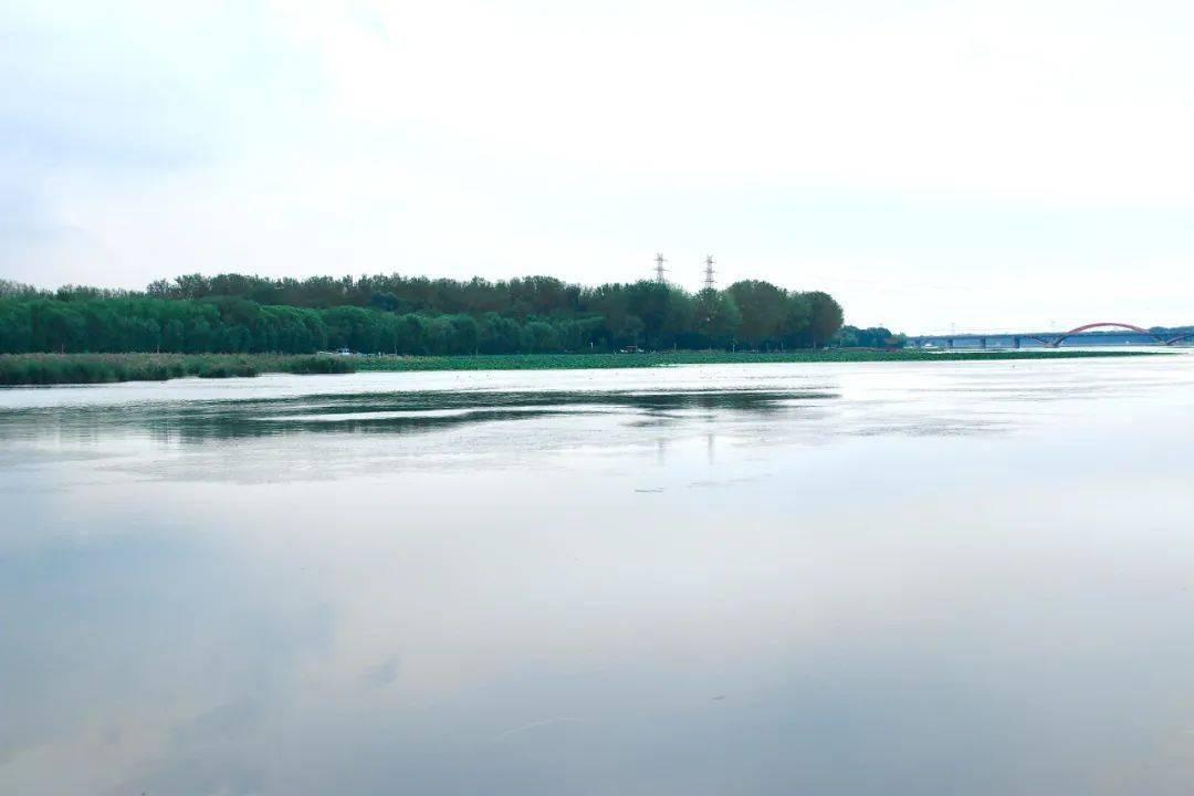 泄洪了!看看顺义潮白河水位涨了不少!