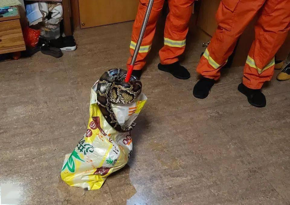 两米大蟒凌晨溜进居民家中!近期多人被毒蛇咬伤,消防提醒……